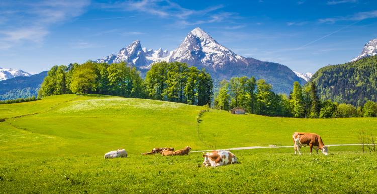 FDP Kreisverband Berchtesgadener Land
